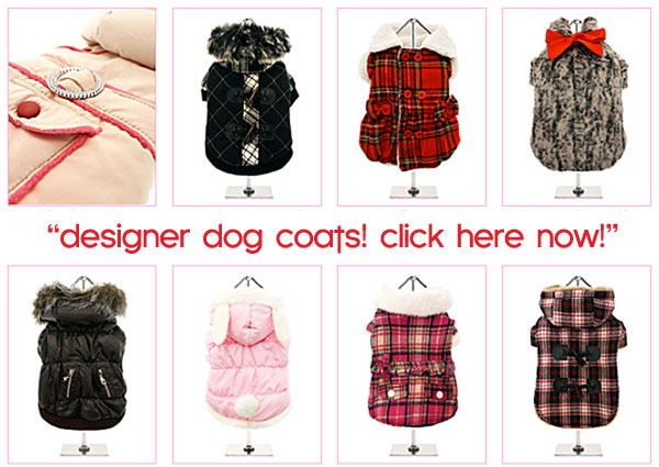 designer dog coats