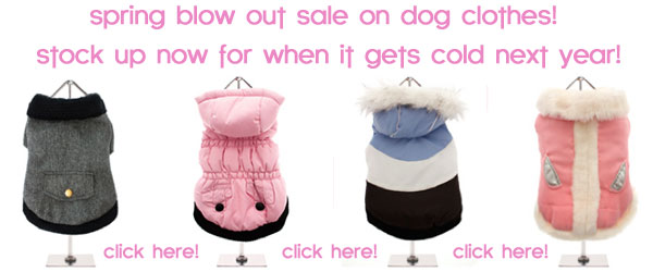 sale chihuahua dog clothes