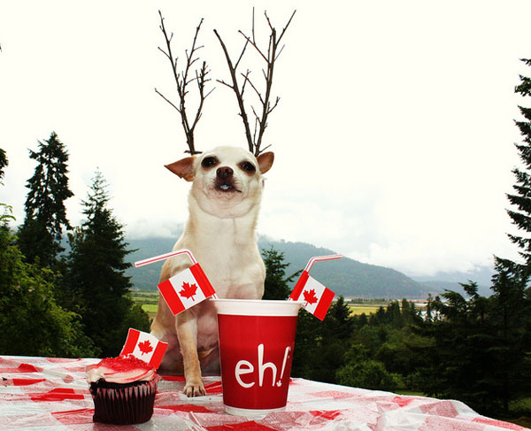canada day chihuahua