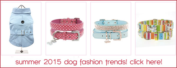 summer dog fashions trends