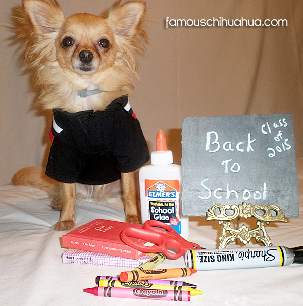 chihuahua back to school