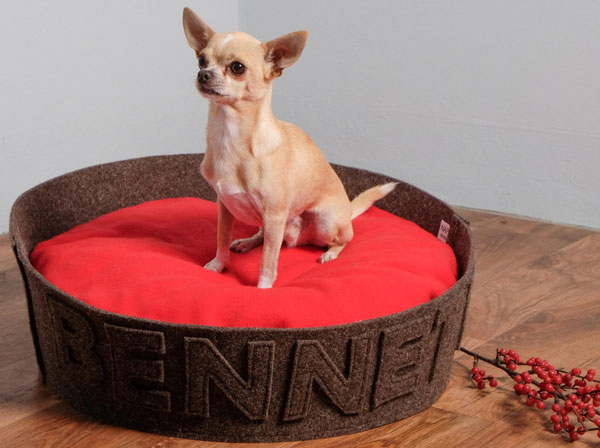 chihuahua on naps dogbed