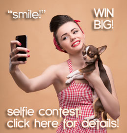 chihuahua selfie contest