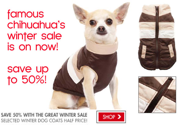 winter sale on chihuahua coats
