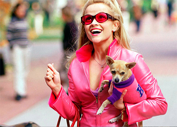 bruiser legally blonde chihuahua