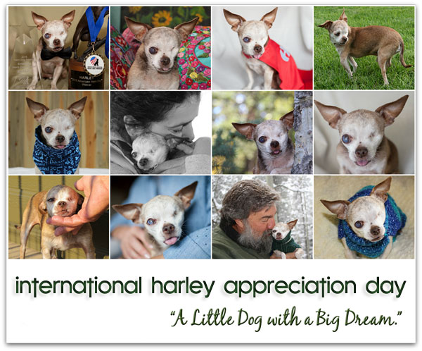 intl-harley-appreciation-day