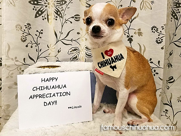 lincoln-chihuahua-appreciation-day