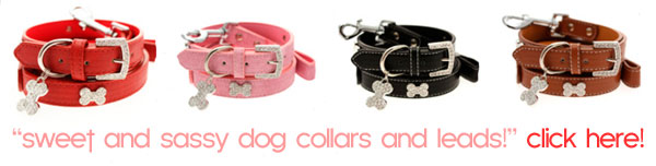 dog collars leads sale