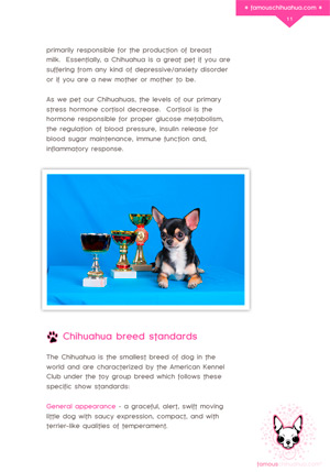 chihuahua breed standards