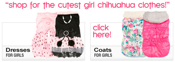 cute cute girl chihuahua clothes
