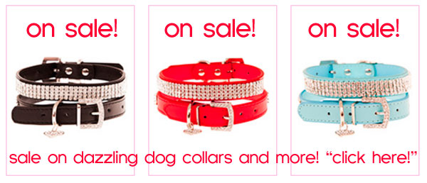 sale on dog collars!