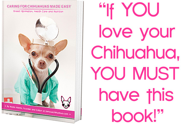 chihuahua care ebook