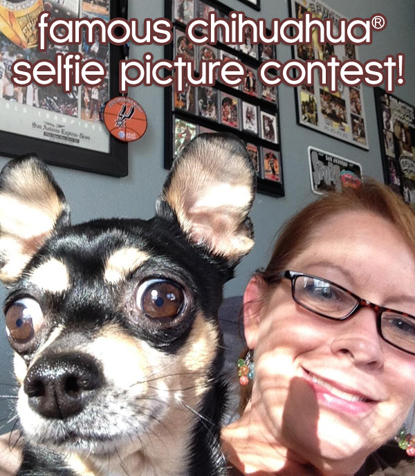 famous chihuahua selfie picture contest!