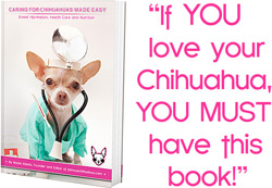 how to take care of your chihuahua!