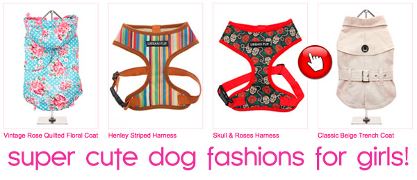 super cute girl dog fashions