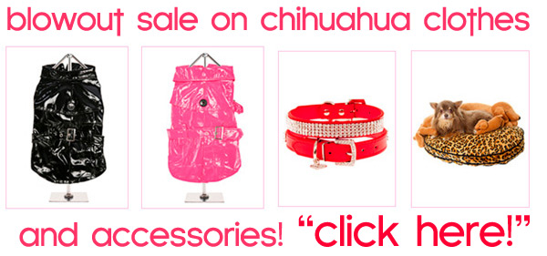 clearancet sale on cheap chihuahua clothes and accessories