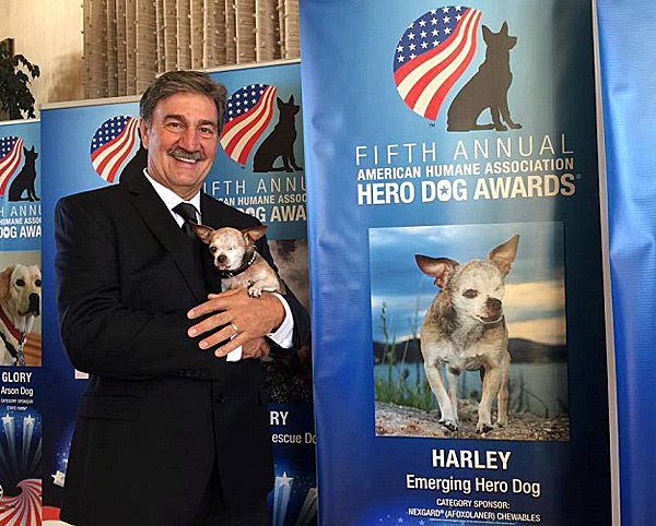 harley named the 2015 american hero dog