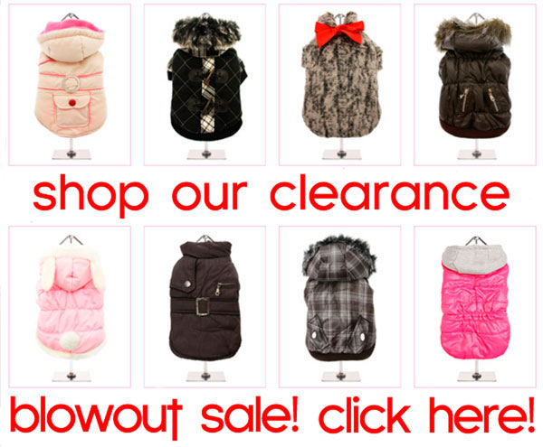 clearance blow out sale on chihuahua clothes and accessories