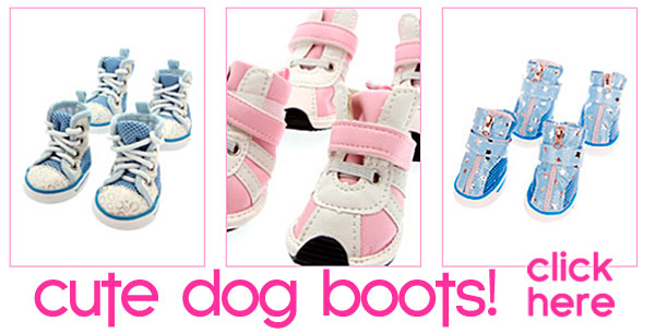 dog booties and socks