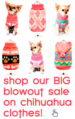 clearance sale chihuahua clothes