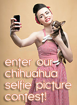 chihuahua selfie picture contest