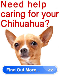 Chihuahua rescue and puppy mill rescue organizations
