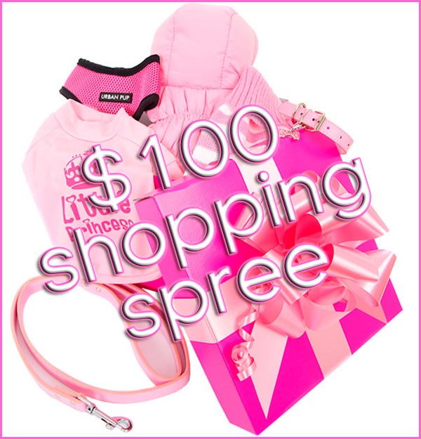 win a $100 shopping spree chihuahua clothes