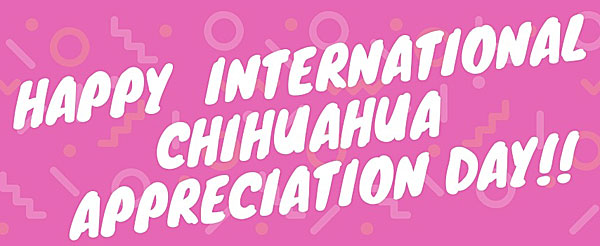 international chihuahua appreciation day