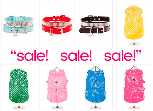autumn sale on chihuahua clothes and accessories