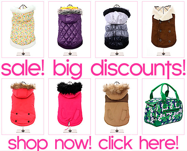 big sale chihuahua clothes and accessories