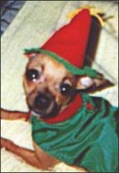 teaka-the-elf.jpg