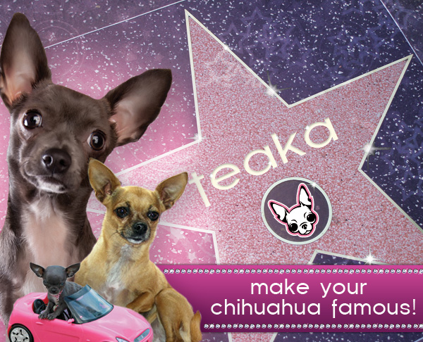 make your chihuahua famous!