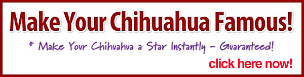 make your chihuahua famous