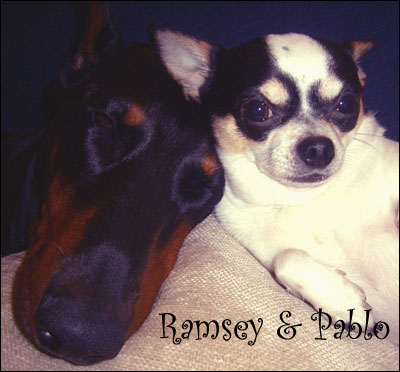 ramsey and pablo, companions for life