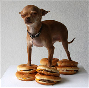 cheeseburger-chihuahua.jpg