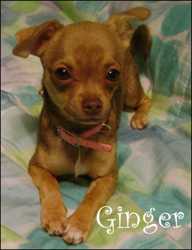 sweet baby ginger!.jpg