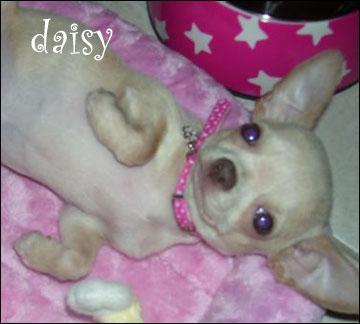 sweet lovable daisy