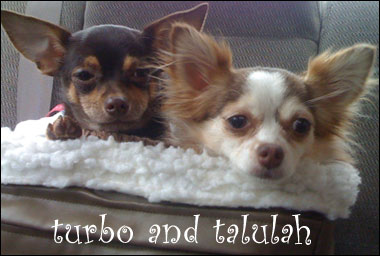 turbo and talulah