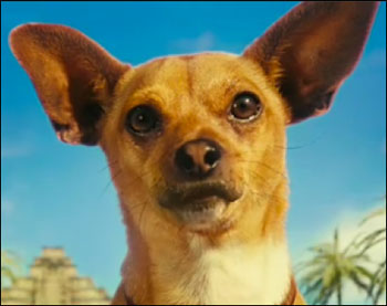 papi the star of beverly hills chihuahua