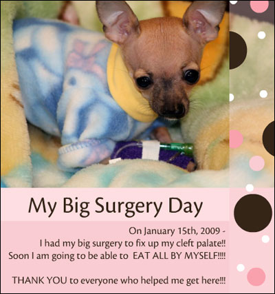 emma the chihuahua. click image to witness a miracle!