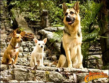 papi, chloe and delgado from beverly hills chihuahua