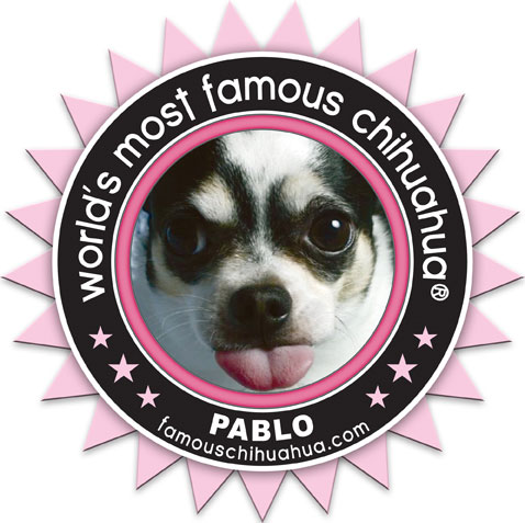 pablo, the world's most famous chihuahua