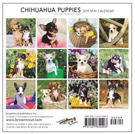 chihuahua puppies mini calendar