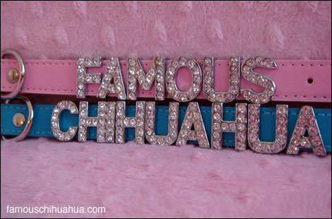the famous chihuahua store now offers gorgeous high-fashion personalized chihuahua dog collars!