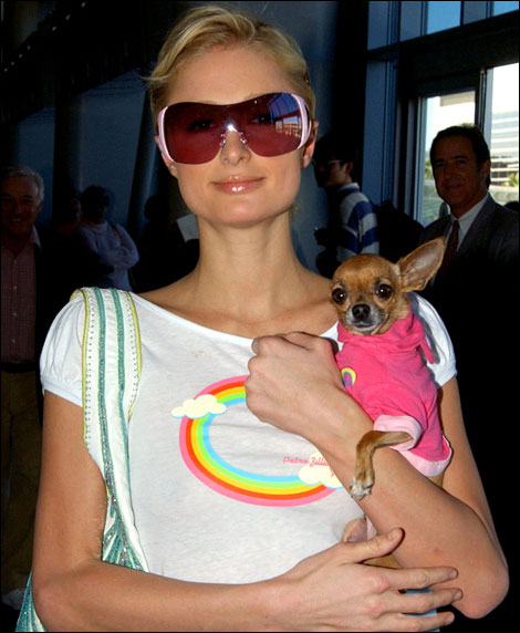 paris hilton arrives at los angeles international airport with her pet chihuahua dressed to match