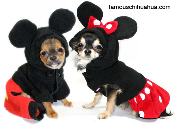 did you know mickey and minney mouse both have the same last name?