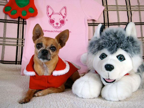 merry christmas from teaka and ballsie!