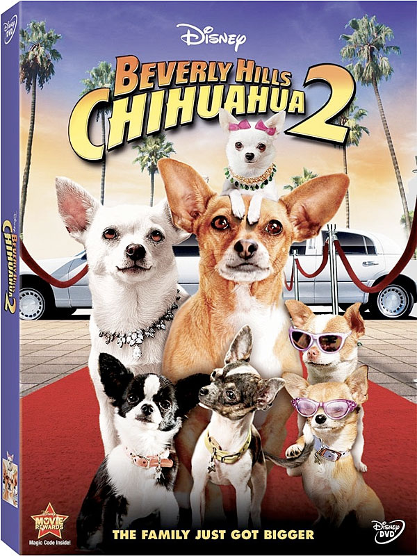 click image to order your copy of beverly hills chihuahua 2 on dvd!