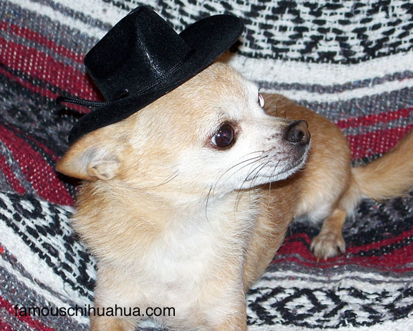 i'm so handsome in my doggie hat