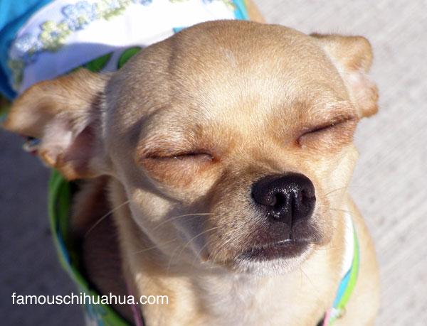 show us your sun smile lola!